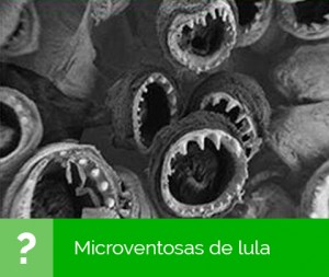 microsc04_resp